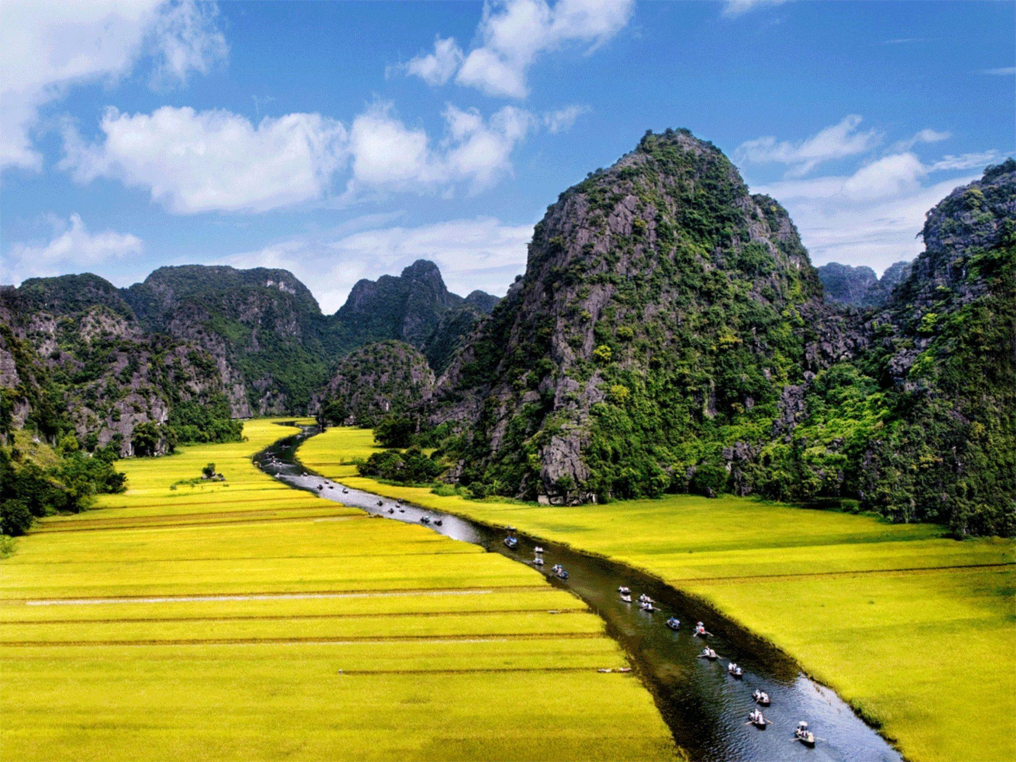 Rice terrace in Vietnam